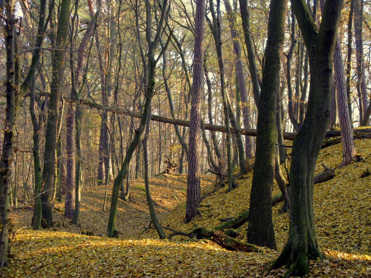 XIII-wieczne grodzisko w Obwodzie Ochronnym Zamczysko. Fot. K. Fidler